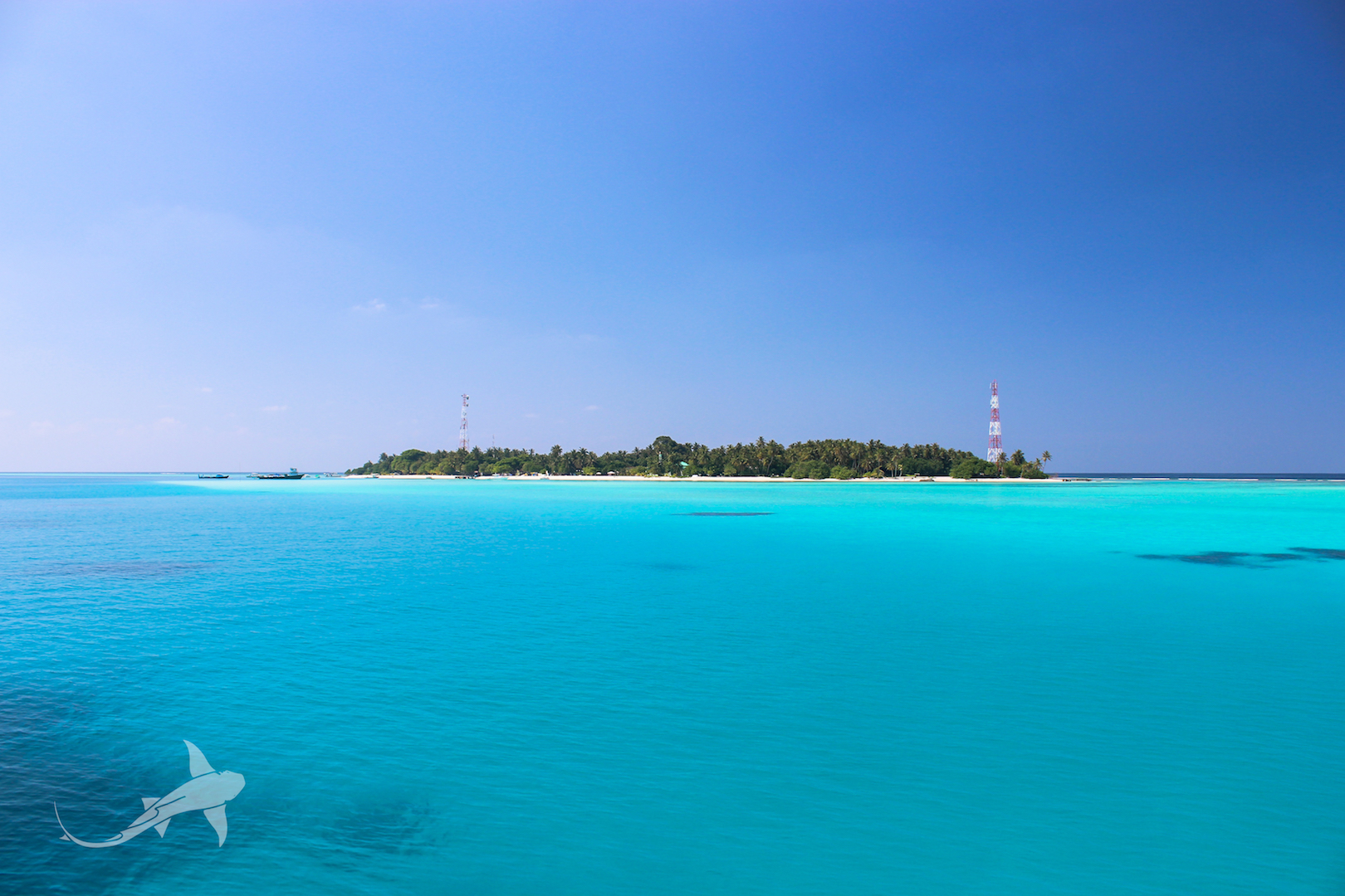 best local island for diving in maldives